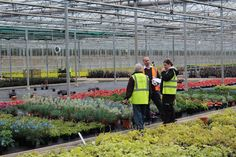 Inspecting plants on Hillier nurseries with two months to go until Chelsea Flower Show 2017