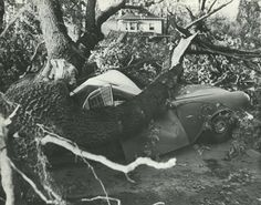1962 Columbus Day Storm (Typhoon Frieda) destroyed most of the trees on campus, damaged buildings, and killed two students. From the 1963 Oregana (University of Oregon yearbook). www.CampusAttic.com Evergreen State, Columbus Day, University Of Oregon, Washington State, Pacific Northwest, North West, Portland, Buildings, Students