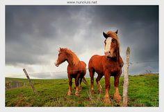 Olhares.com Fotografia   �Nuno Luis   Wild Horses