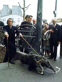 Salvador Dali and his pet ant-eater From So Bad So Good