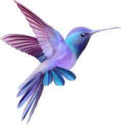 Colorful bird clipart 64 New Ideas Vogel Clipart, Bird Clipart, Hummingbird Pictures, Hummingbird Art, Hummingbird Tattoo Watercolor, Vogel Tattoo, Diy Tattoo, Tattoo Bird, Tattoo Ideas
