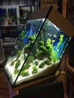 50+ Aquarium Ideas Home_26