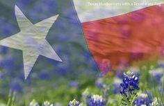 Texas flag & Bluebonnets...