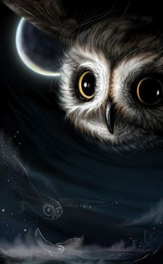 Night of the owls