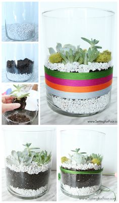 So EASY to make! DIY Succulent Terrarium indoor garden with color.