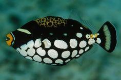 Os 10 Peixes mais bonitos do Mundo