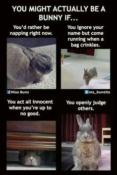 Bunny Memes Just For The Rabbit Parents - Hase Cute Baby Bunnies, Funny Bunnies, Cute Baby Animals, Funny Animals, Hunny Bunny, Rabbit Life, House Rabbit, Rabbit Cages, Funny Rabbit