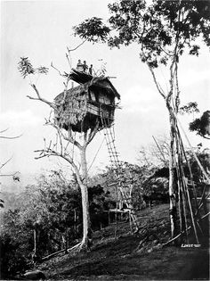 TREE HOUSE, KOIARI VILLAGE. New Guinea Black and white photograph of a house in a tree, with long ladder connecting it to the ground.