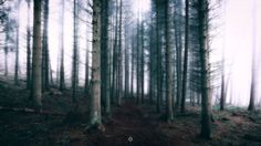 Last Exit - A long exposure, landscape image of a seemingly, lifeless forest on a foggy day in Perthshire, Scotland.