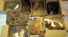 How to organize cats...  #lol   #funny   #cats