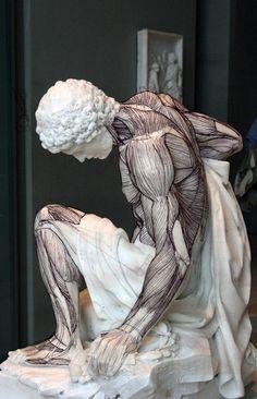 Study of musculature by Stuart Morris