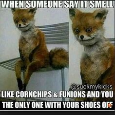 Shoes Smell Like Cat Pee