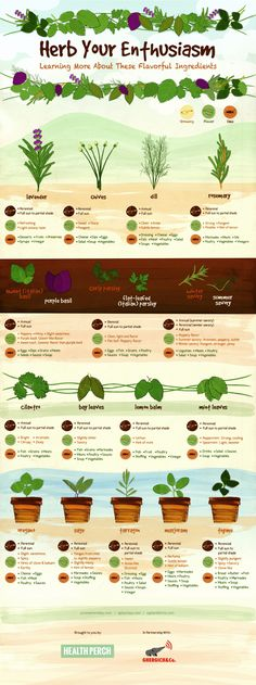 Herb Your Enthusiasm - Culinary Herbs Infographic by herbalacademnyofne #Infographic #Herbs