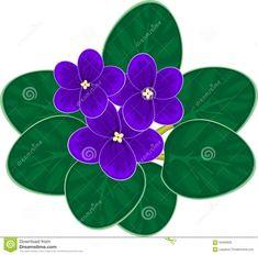 Violetas Africanas (saintpaulia) Ilustração do Vetor - Ilustração: 63565828