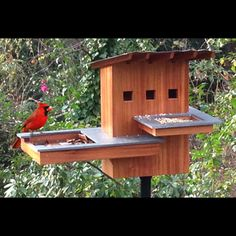 bird house plans cardinals