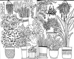 Klika Design: Creativebug Drawing Challenge with Lisa Congdon Day 24: house plants