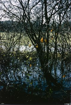 Maurice Vouga (Switzerland, born 1949), Untitled (Trees In Fall, Stream), 1984, The Marjorie and Leonard Vernon Collection, gift of The Annenberg Foundation, acquired from Carol Vernon and Robert Turbin (M.2008.40.2296)
