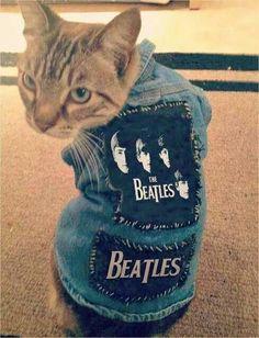 Awwww cat