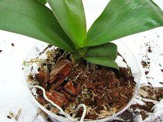 Обработка и подготовка коры для орхидей