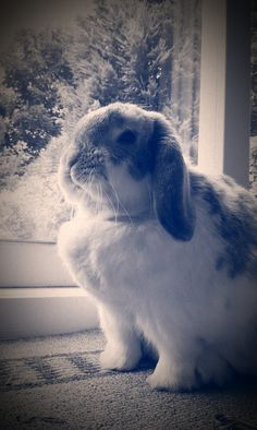 Bunny is stoic and proud - September 2, 2012