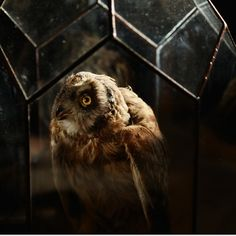 Hello, it's been awhile. Here's an owl in glass case 🌒  #owl #taxidermy #curiosity #oddity #macabre #death #decor #create #unique #toronto #interiors #art #earth #sculpture #stainedglass #geometric #nature #animal