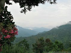 See The Foothills of the Himalayas From Darjeeling, West Bengal, India