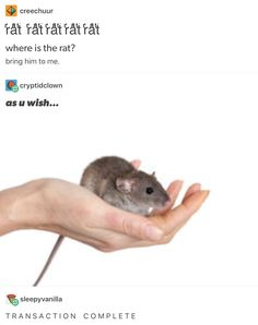 RATS Stupid Memes, Dankest Memes, Funny Memes, Hilarious, Reaction Pictures, Funny Pictures, Haha, Memes Of The Day, Funny Tumblr Posts