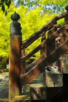 Cat is resting on the stairs of shrine in Kyoto, Japan