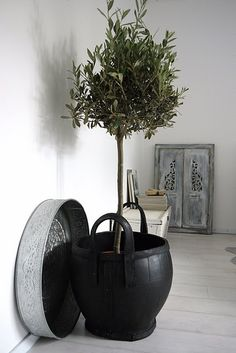 Olive tree in nice pot << the pot looks like recycled rubber.  Also, an olive tree won't live very long indoors ...