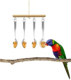 Lick foraging enrichment for parrots and other animals. Make a unstable design with spoons, and put something sticky but bird-safe food on spoons. It is a challenge for the animal to lick the food of swinging spoons.
