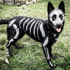 Artist Bryn Anderson Creates a Skeleton Dog -- From Her Own