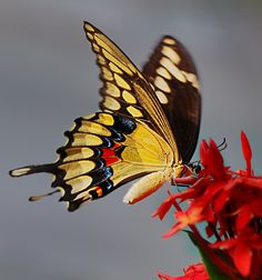 vvv Butterfly by Bill Mangold