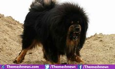 Top 10 Most Expensive Dogs In The World 2016