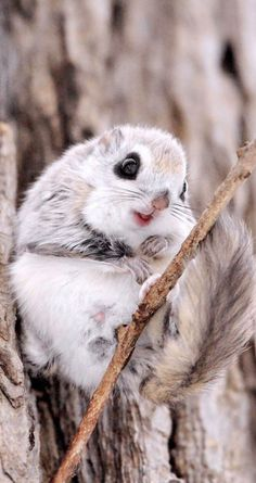 Aww... irresistible cuteness! 9 Charming Squirrel Photography wallpapers for iPhone 5/5S, iPhone 6 & 6 Plus #animals #photography #cute. - @mobile9