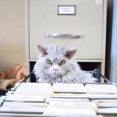 bitchy-resting-face-sheep-cat-albert-3-605x605_R