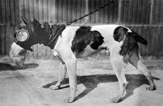 Military gas masks for animals