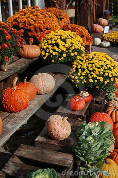 Fall Farmers Market - The farmers market today was absolutely beautiful.  I love the vendors.  Everyone is always so friendly