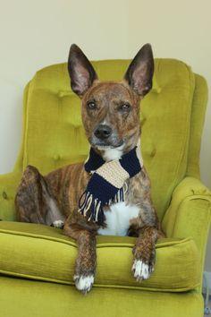 Stripy Tassel Dog Scarf  Size 2 by SnugABull on Etsy, $16.00