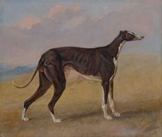 Turk, a greyhound, the property of George Lane Fox by George Garrard, 1822.