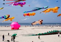 Kite Festival-- maybe Julia would like to go with me.