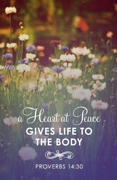 a heart at peace gives life to the body | Proverbs 14:30