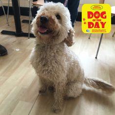 Daisy Dog Friends, Dog Days, Daisy, Animals, Animaux, Margarita Flower, Animal, Bellis Perennis, Animales