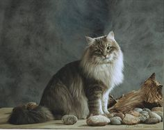 Siberian (Forest) Cat Origin Russia The Siberian is a domestic cat breed that has been present in Russia for centuries. Siberian Forest Cat, Siberian Cat, Cute Kittens, Cats And Kittens, Cats Bus, Norwegian Forest Cat, Cat Behavior, Fluffy Cat, Domestic Cat