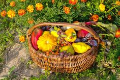 marigolds in garden 14 Reasons to Grow Marigold in Your Vegetable Garden Household Borax Cleaning, Diy Home Cleaning, Cleaning Wood, Household Cleaning Tips, Deep Cleaning Tips, Cleaning Recipes, House Cleaning Tips, Diy Cleaning Products, Cleaning Hacks