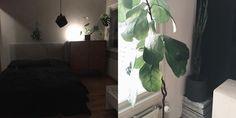 Täydellinen pakkanen tappohommiin, uusi kukkanurkka ja yksi lempihuoneistani   matto, sisustuksen hankalin asia?