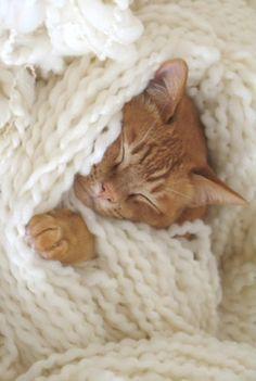 Cottage Kitty ~