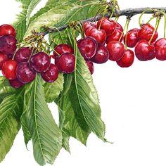 Janie Pirie – The Society of Botanical Artists