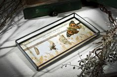 "J. Devlin Glass Art-Filled #Tray, #Butterfly, Tra 111-5 ""The life of a butterfly"""