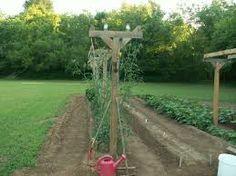 Bildergebnis für garden fence raspberry