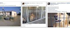 Bir grup hayvan sever Güzelyurt'taki hayvan barınağındaki kötü şartlara dikkat çekmek için basın açıklaması yaptı. Sosyal paylaşım sitesi Facebook üzerinden,...